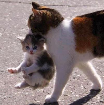 Kisah Mueeza Kucing Kesayangan Nabi Muhammad Saw Dan Keistimewaan Kucing Remaja Sampit