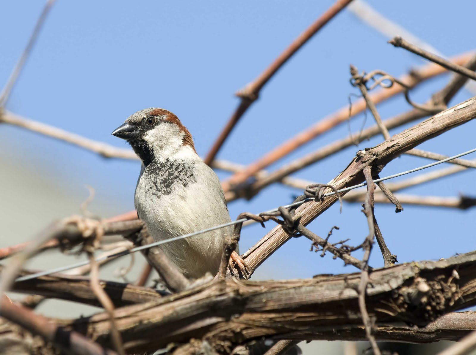Alasdair Turner Photography: Seattle Backyard Birds and ...