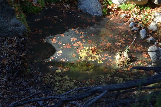 leaves floating in a pool