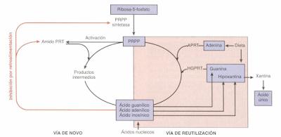 De donde se obtiene el acido urico