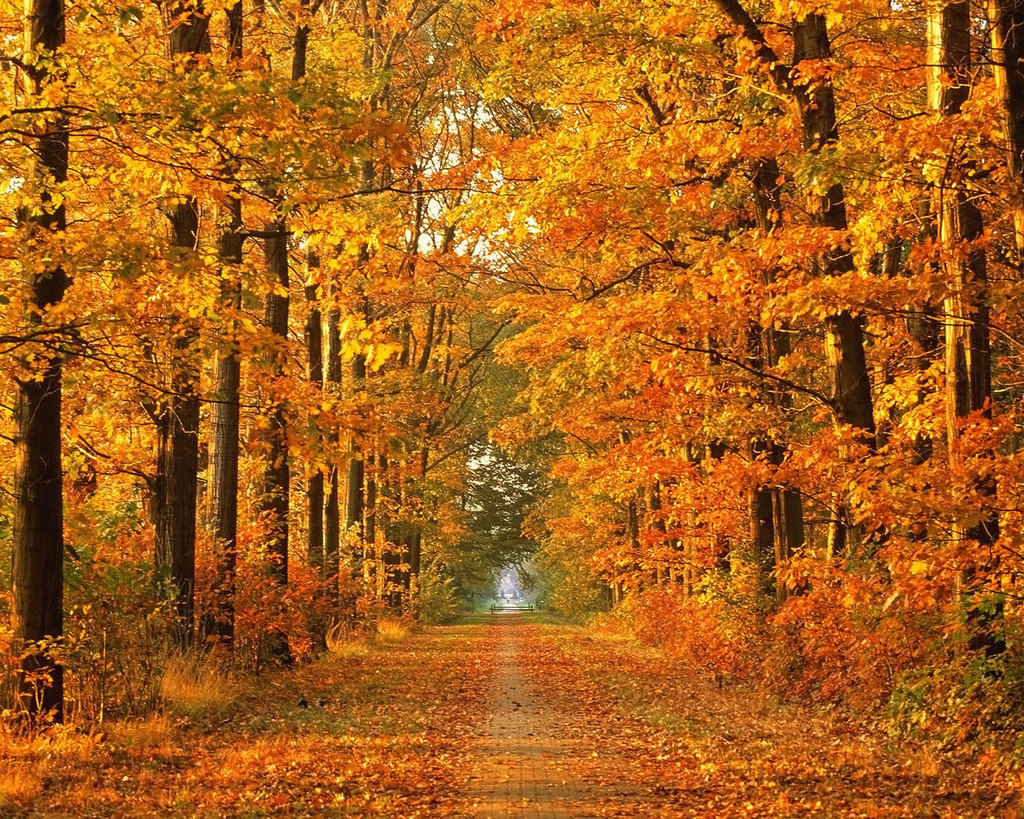 Beautiful Pictures Of Autumn Leaves  Free Download