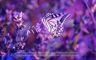 Beautiful%2BNatural%2Bhd%2BFlaowar%2BWallpaper040