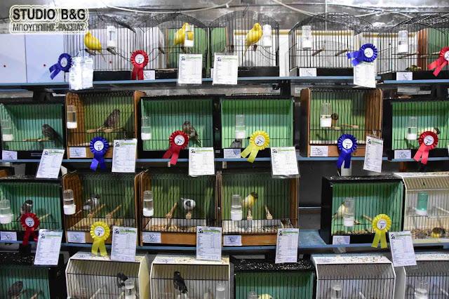 Βραβεύθηκαν τα καλύτερα πτηνά συντροφιάς στην 5η Έκθεση της ΠΕΣΥΠ στο Άργος (βίντεο)