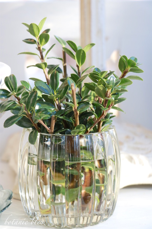 4-tips-to-keep-winter-greenery-fresh