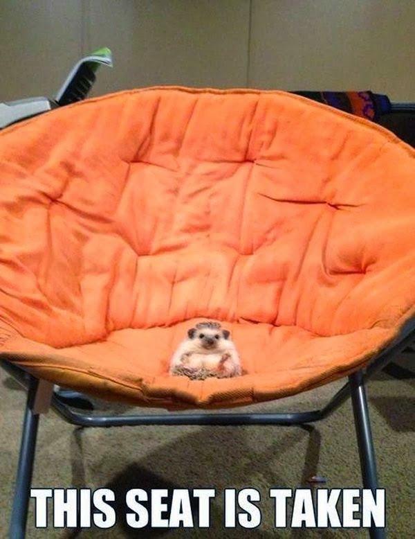 Funny Hedgehog Seat Taken Joke Picture
