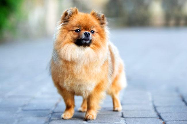 Witaminy dla psa na piękną sierść