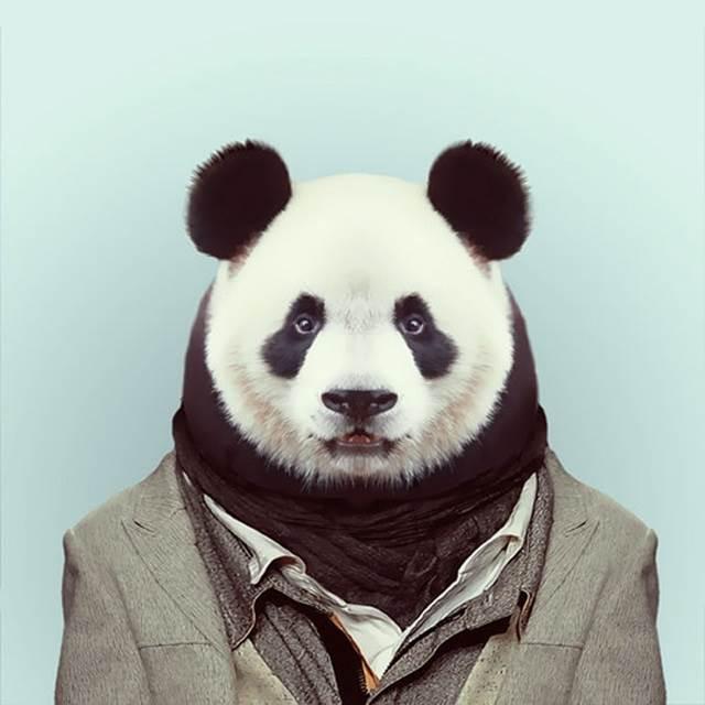 panda-pakai-kot