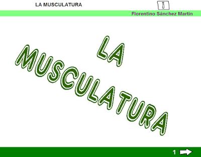http://cplosangeles.juntaextremadura.net/web/tercer_curso/naturales_3/musculatura_3/musculatura_3.html