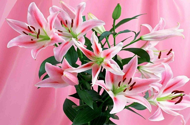 hoa ly dep nhat 2
