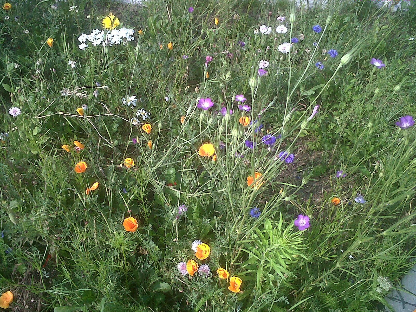 Brianza centrale aiuole fiorite a giussano for Aiuole fiorite immagini