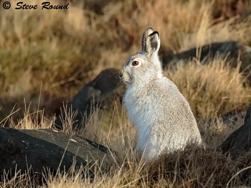 mammal, animal, nature, wildlife