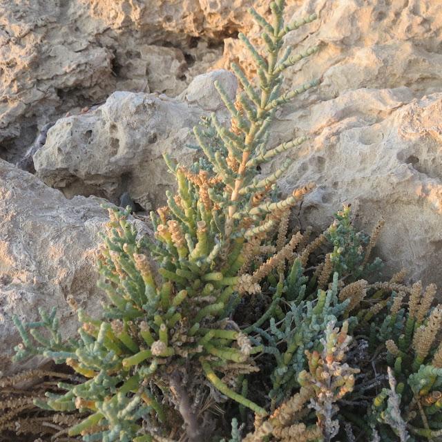 Nim Sofyan - Denizde Karartı Var