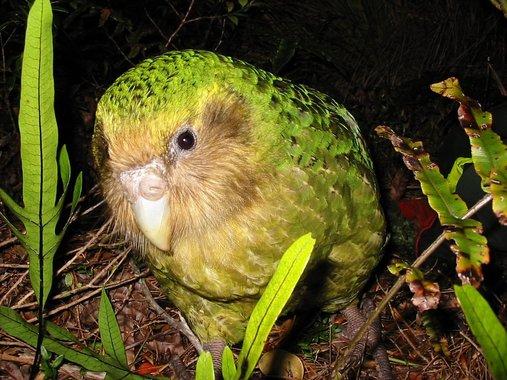 اجمل طيور العالم بالصور, طيور جميلة بألوان غريبة,   خلفيات طيور الحب,  اجمل الطيور البرية,  اجمل الطيور والحيوانات,  اجمل الطيور الحمام,  صوراجمل الطيور,  طيور نادرة للبيع,طيور نادرة