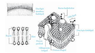 struktur-sel