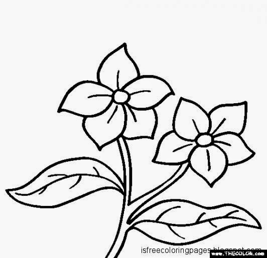 Free Coloring Pages: Flowers Coloring Pages