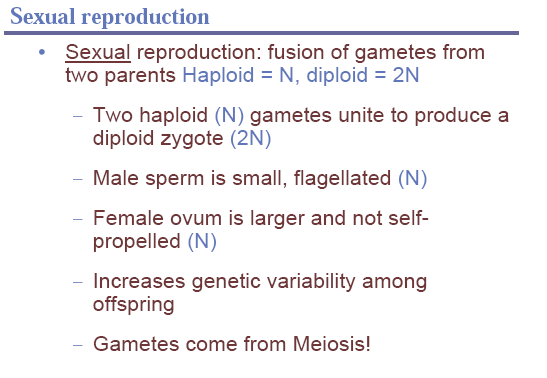 sexual reproduction,offspring,meiosis,diploid,