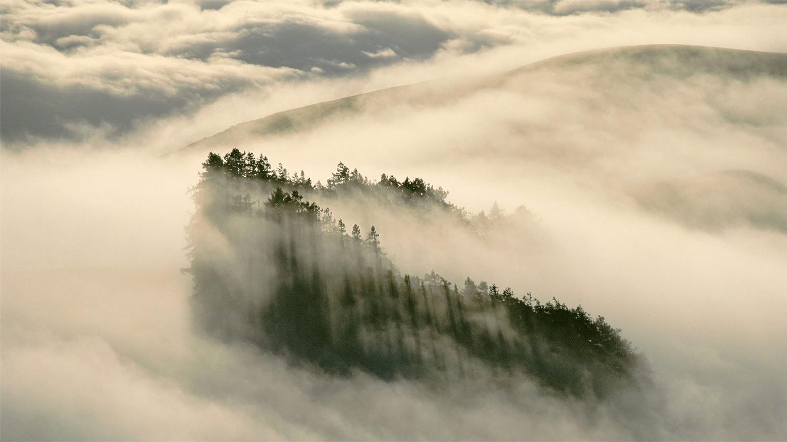 Séquoias à feuilles d'if dans le parc d'État Henry Cowell Redwoods, Californie © Gallery Stock