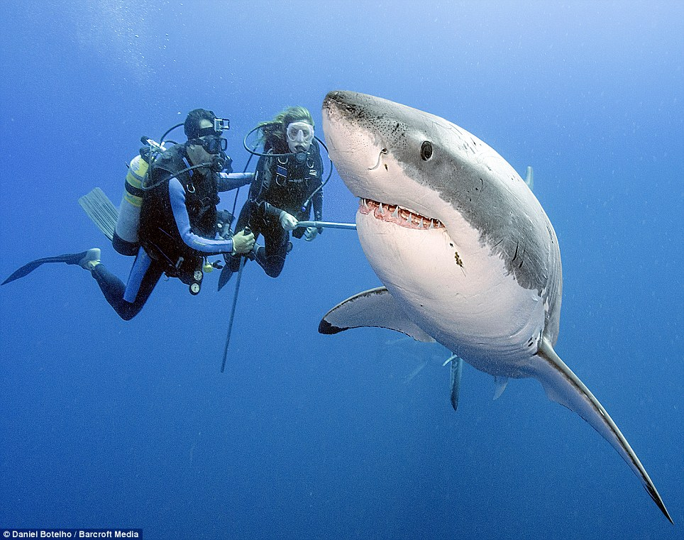 SCUBA SCOOP/latest dive stories: Sharks are not 'man-eaters'