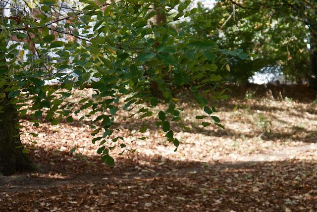 park autumn leaves
