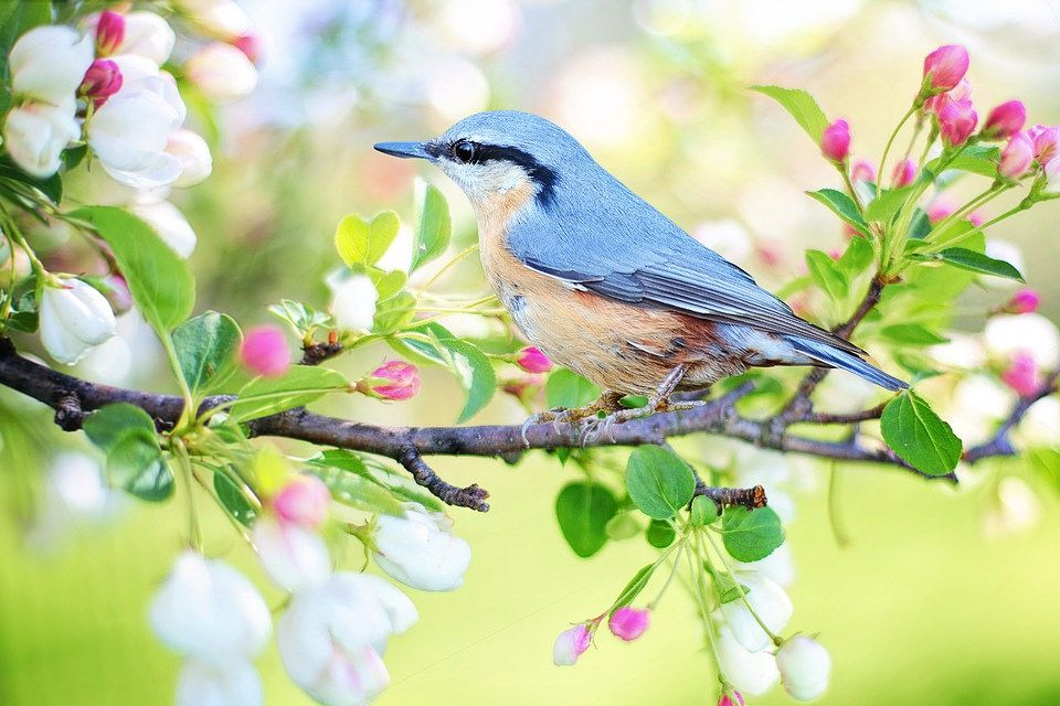 Spring Bird by Vedant Ghanekar