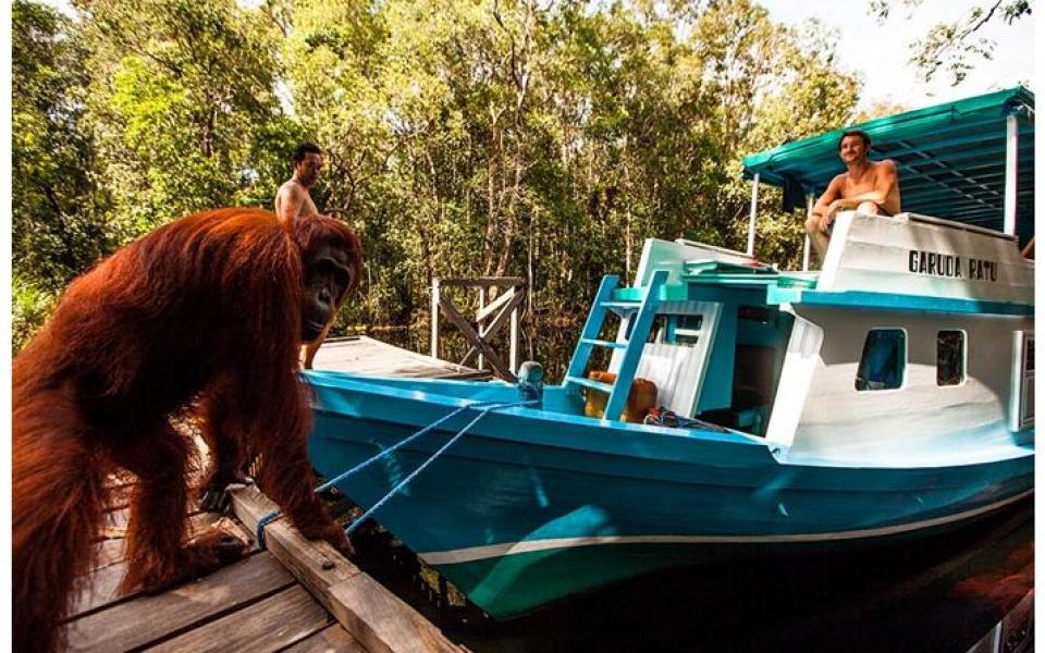 Orangutanes y dragones en Bali