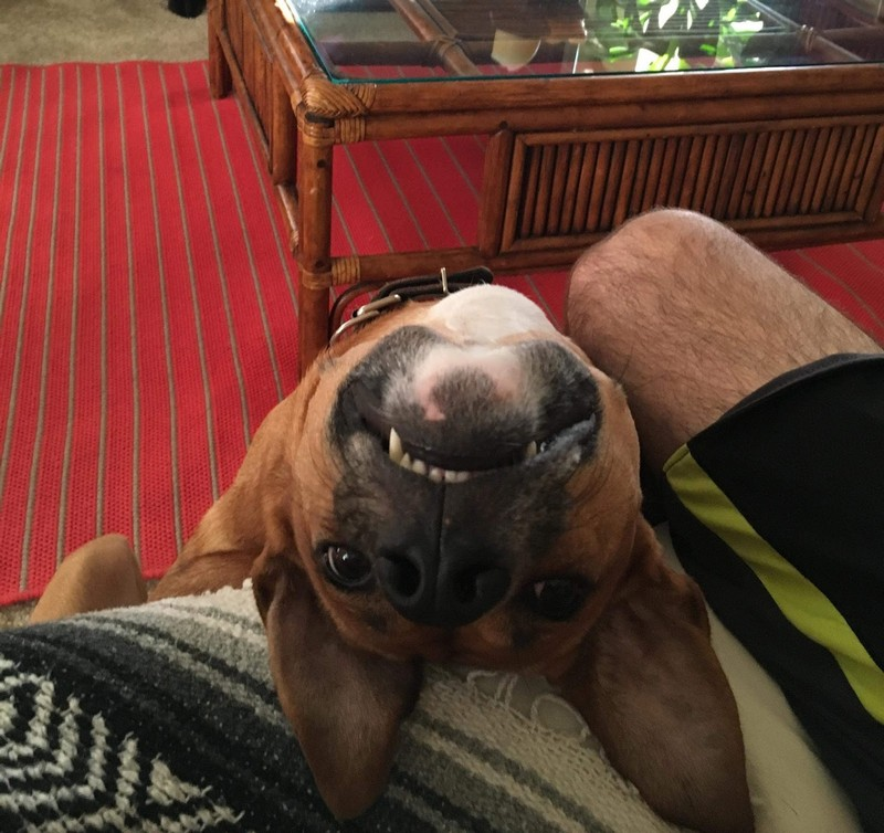 14 фото смешных и забавных собак