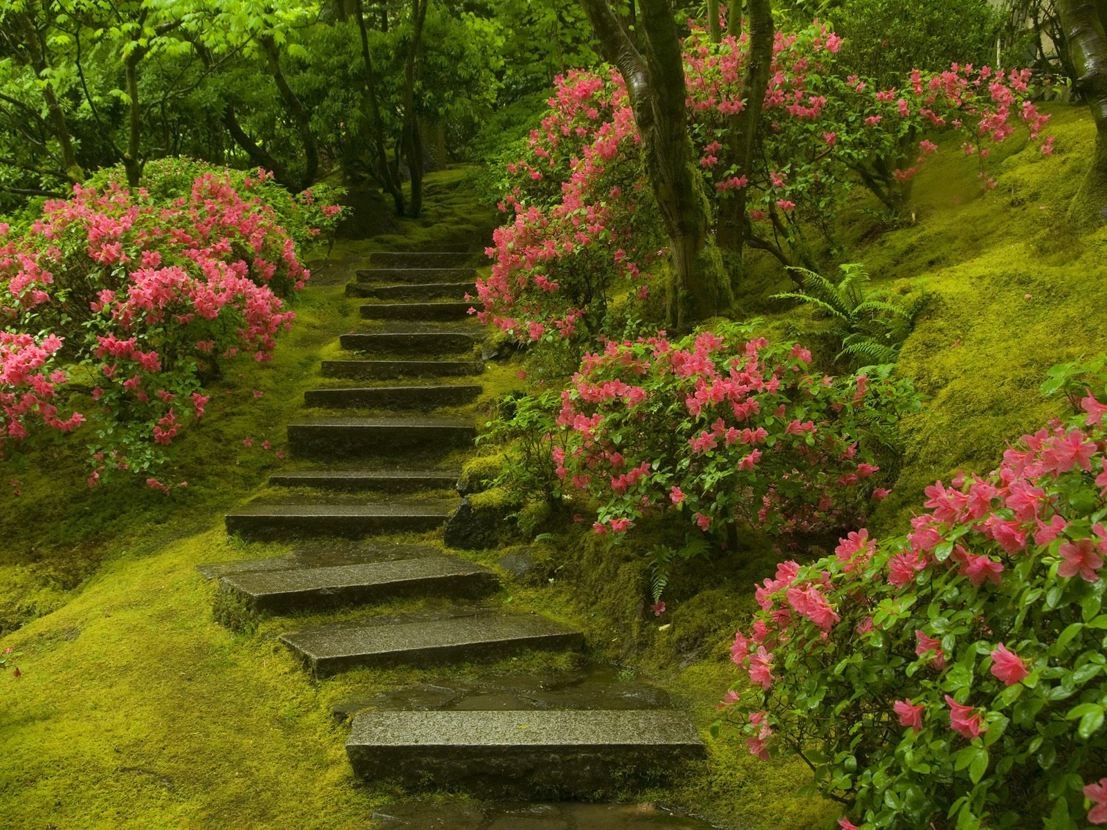 Japanese Garden Wallpapers: Beautiful Flower Wallpapers For You: Spring Wallpaper