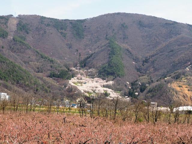戸倉宿キティパーク 桜