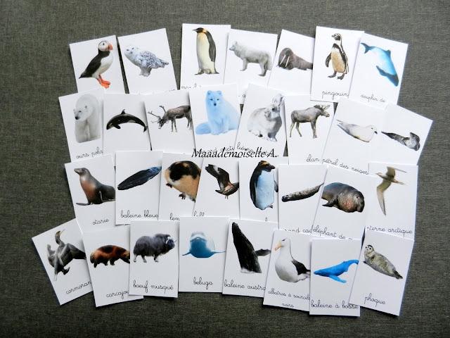 || Cartes de nomenclature à télécharger gratuitement ; Les animaux polaires