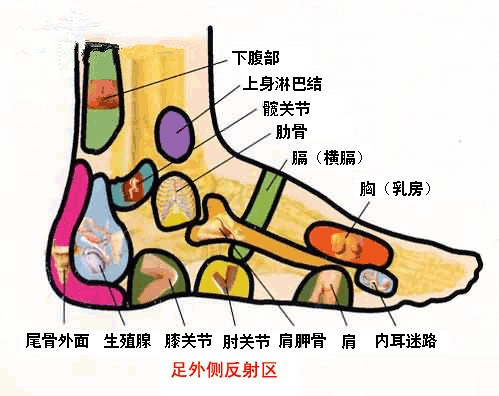 腳面外側反射區位置 - 腳面外側反射區圖解 | Source:healthofall.com/a20168166449/