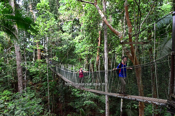 Taman Negara National Park Canopy Walk