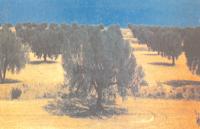 الموسوعة المدرسية - مشهد ريفي من الوسط التونسي