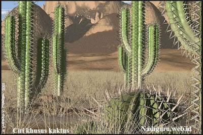 Ciri Khusus Tumbuhan Kaktus