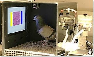 palomas como detectoras del cáncer