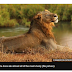South African lions eat 'poacher', leaving just his head