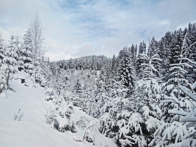 Winter Holidays in Bukovel