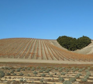 Niner Estates Decorated Heart Hill with Vineyards