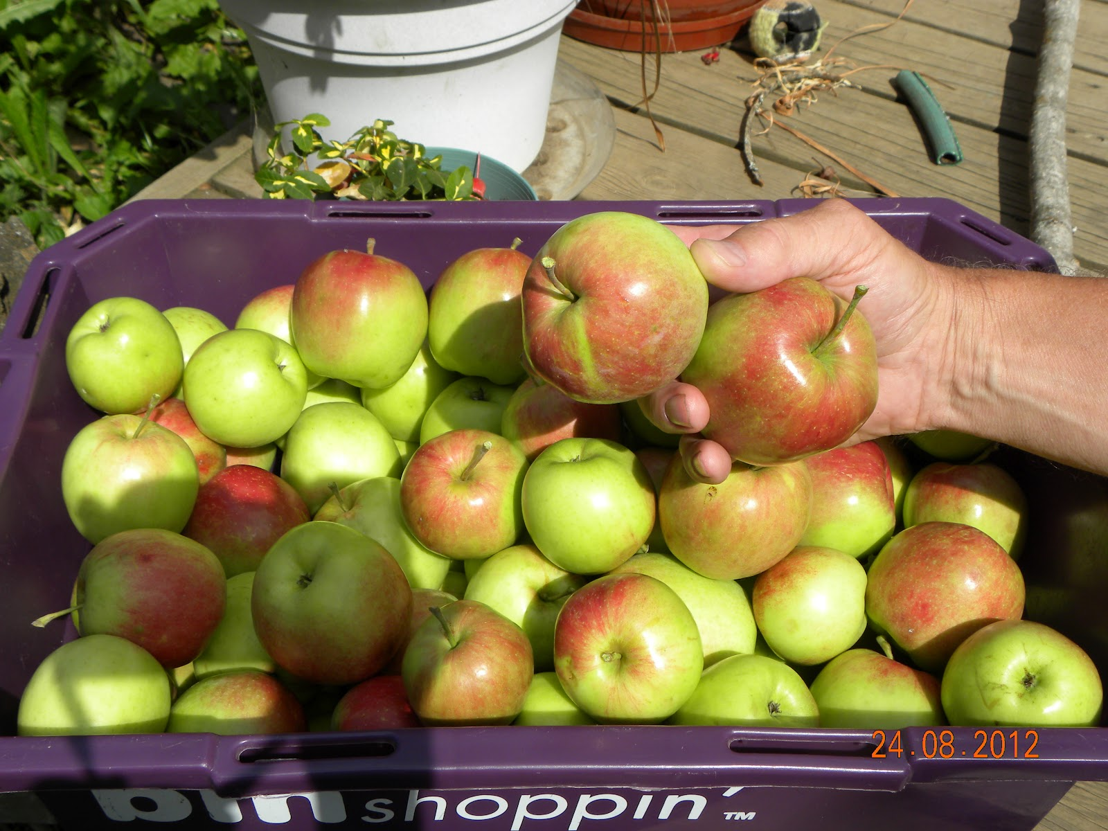 Incoming Bytes Apples Galore