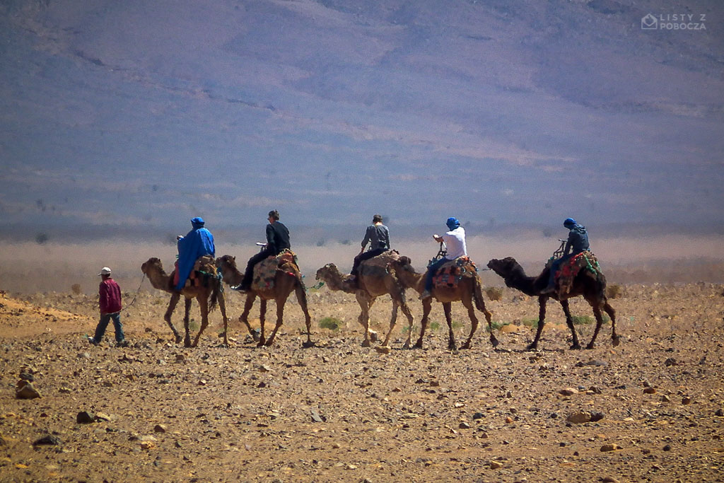karawana wielblady sahara pustynia maroko