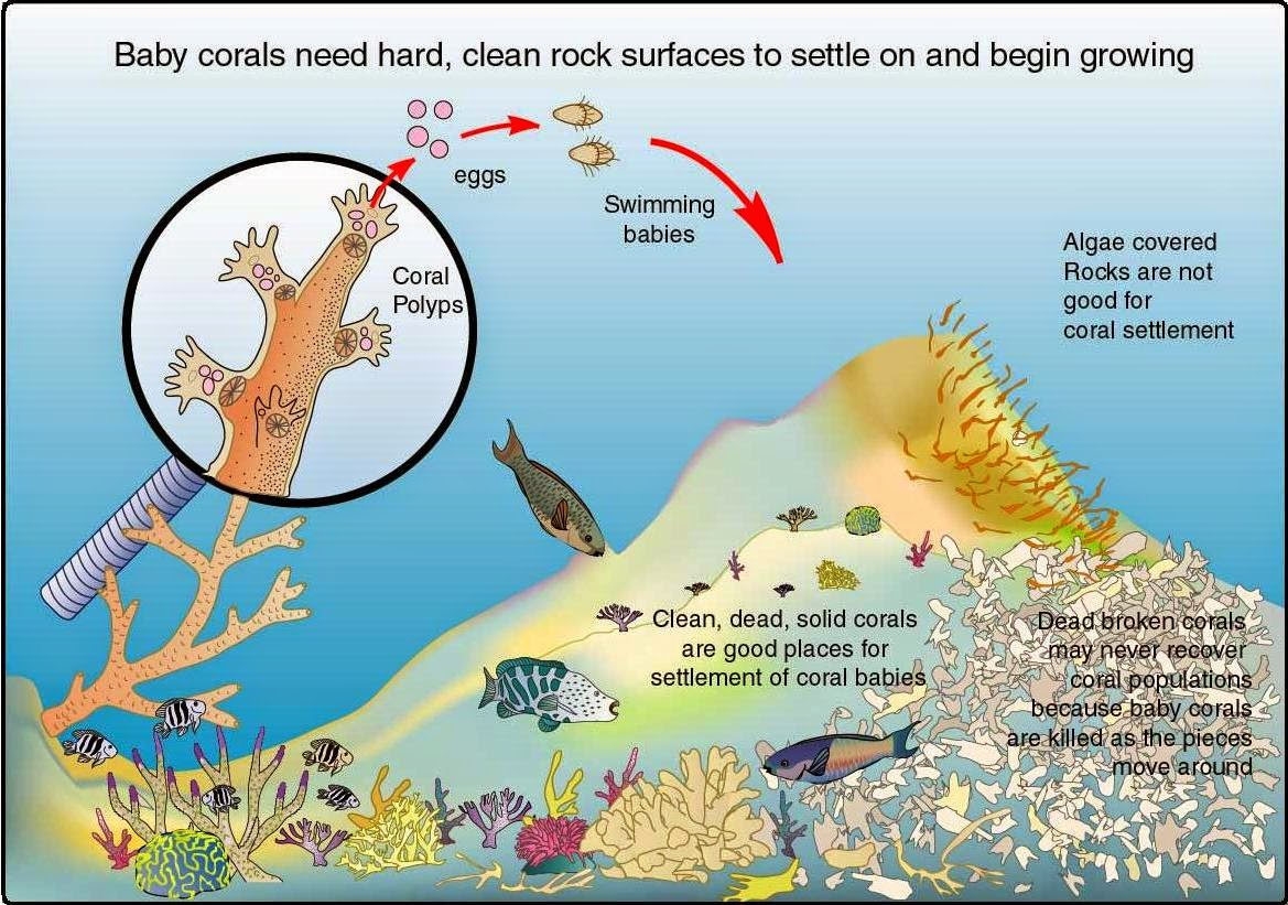 Sea Turtle Life Cycle Diagram 99 Jeep Cherokee Wiring Living With Nature School On Blog By Dr Abercio V