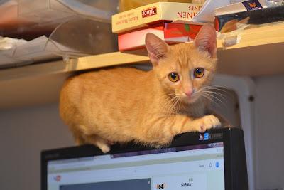 Pisica noastra Simba pe monitor in atelier