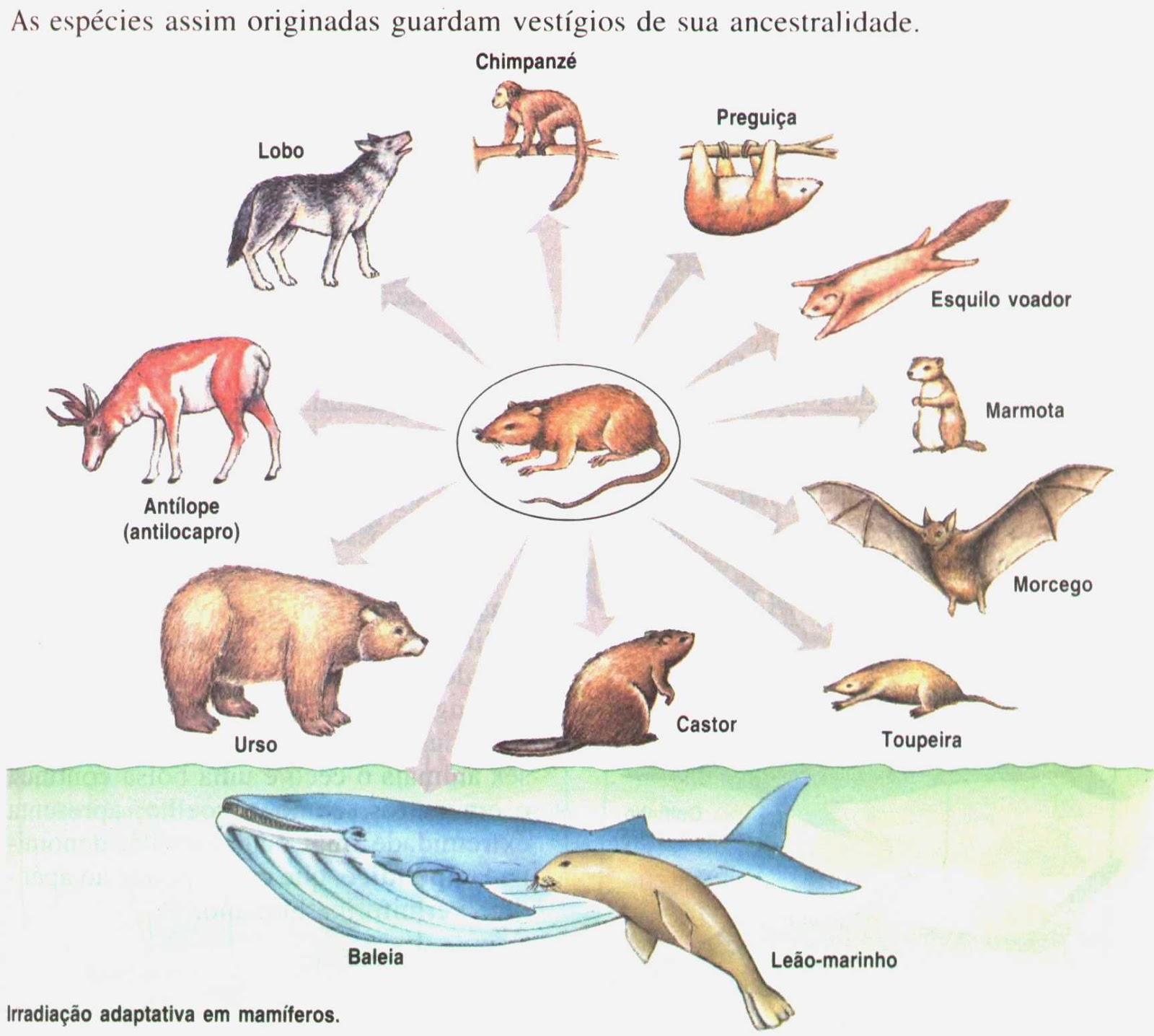 Adaptação Biológica