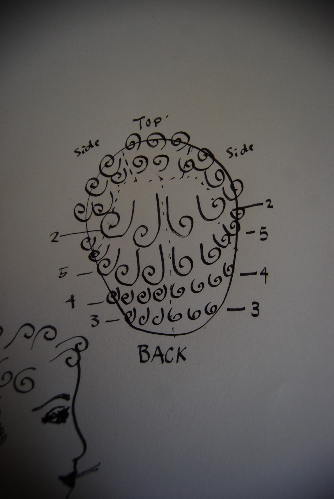 pin curl diagram vauxhall astra radio wiring the cats and berries curls as promised