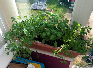 kitchen window herb garden