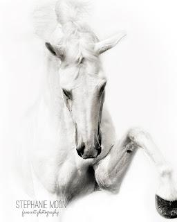 white%2Bhorse.jpg