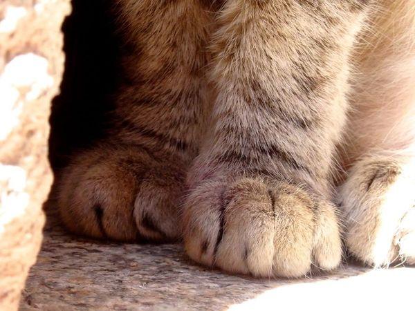 cat paws close-up