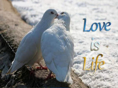 love-is-life Allfreshwallpaper