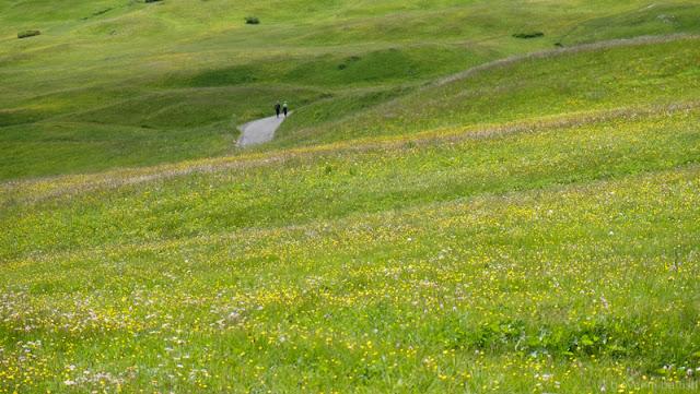 Sentiero tra i fiori all'Alpe di Siusi