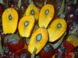 buah-kelapa-sawit-ppks-540.jpg