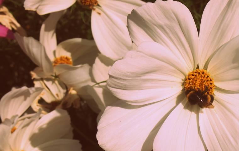 Butlins Flowers: Wordless Wednesday Linky